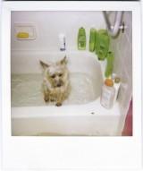 お風呂の鏡のウロコ汚れと格闘したよ